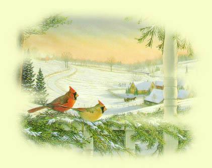 Biglietti Di Natale On Line.Cartoline Natalizie Erboristeria Dulcamara Cartoline